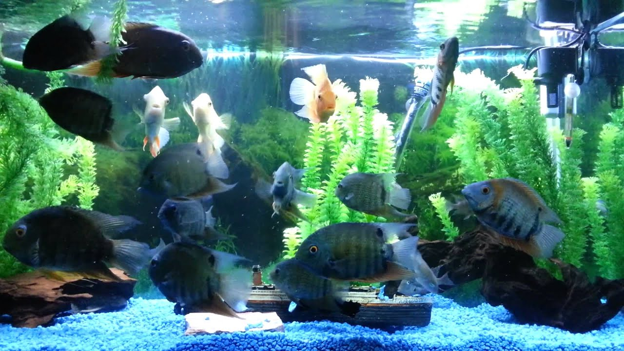how to stop green slime in fish tank