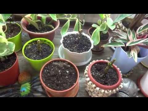 Вопрос: Вредно ли есть обработанные цитокининовой пастой растения?