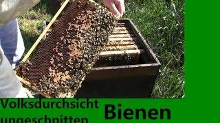 Volksdurchsicht ungeschnitten, Rücken schmerzen, Honig verkauf, Königinsuche, Varroamilbe auf Biene