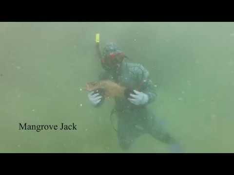 Baixar Spearfishing Ulladulla - Download Spearfishing