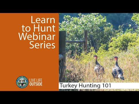Colorado Turkey Hunting 101