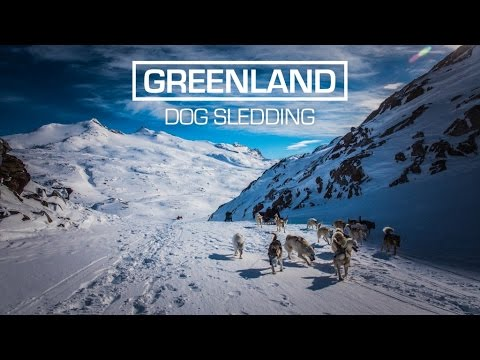 Arctic Dog Sledding in East Greenland