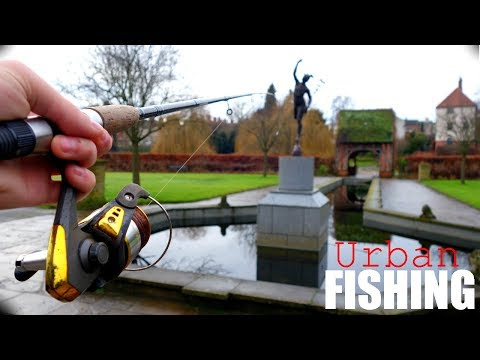 URBAN FISHING And UNEXPECTED FISH???