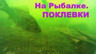 Поклевки на Поплавочную удочку окуней, бычков, карасей. Съемка над и под водой. Рыбалка. Fishing(Поклевки на Поплавочную удочку карася, окуней, бычков. Съемка над и под водой.….((Мой канал- это (в основном)..., 2016-05-31T09:50:17.000Z)