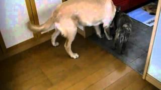 アストロ君は、家内の友達ん家の愛犬。 めずらしい犬種でナルパパは何度...