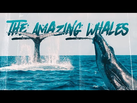 Call of The Humpback Whale (Incredible Journey to Tonga)