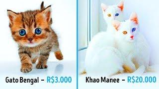19 Gatos Fabulosos que Custam uma Fortuna