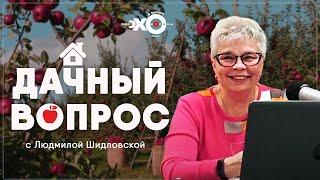 Дачный вопрос • 15.09.2021 // Тамара Александрова / Ведущая Людмила Шидловская