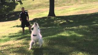 Dog Strength Training - Hill Work - Pro Plan P5 Training