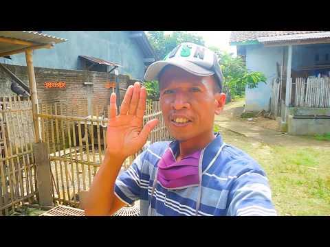 grebek-penjual-merpati-kolong-cilacap-vlog-01-www.merpatikusokaraja.blogspot.com