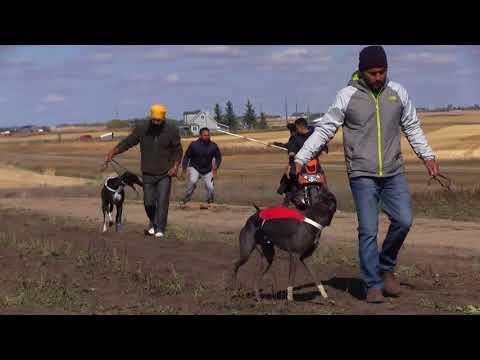 Greyhound Races Calgary Alberta
