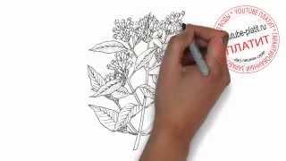 Как нарисовать ветку дерева лиственница карандашом(Как нарисовать дерево поэтапно карандашом за короткий промежуток времени. Видео рассказывает о том, как..., 2014-07-02T17:37:47.000Z)