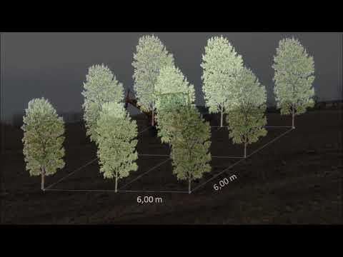 Realizzazione Impianti sperimentali per la produzione di legname per sfogliati