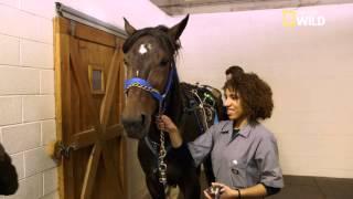 Muscle & Spice, un cheval de course malade