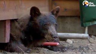 Bear Hiding Under House Gets A Little Help | The Dodo
