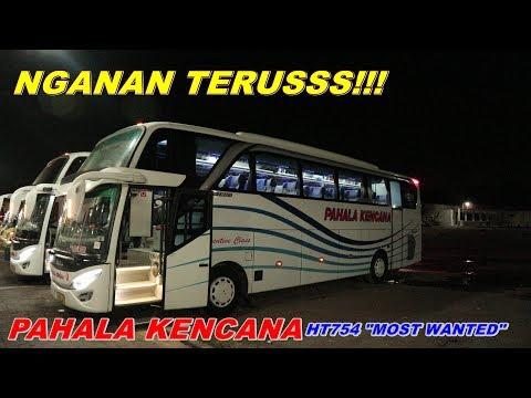 "RECOMMENDED BUS!!! #TRIP PAHALA KENCANA HT754 ""MOST WANTED"" #LANJUTAN TRIP KENA ATLIT LEMPAR BATU"
