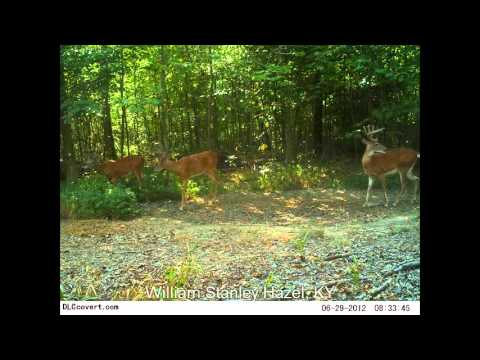 Lucky Buck's Trail Cam Collection (August 2012) II
