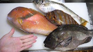 なんとなーく仕入れたこの魚。タカノハダイ。イラ。メジナ。巨大マアジでお刺身作って昼飯です^^ thumbnail