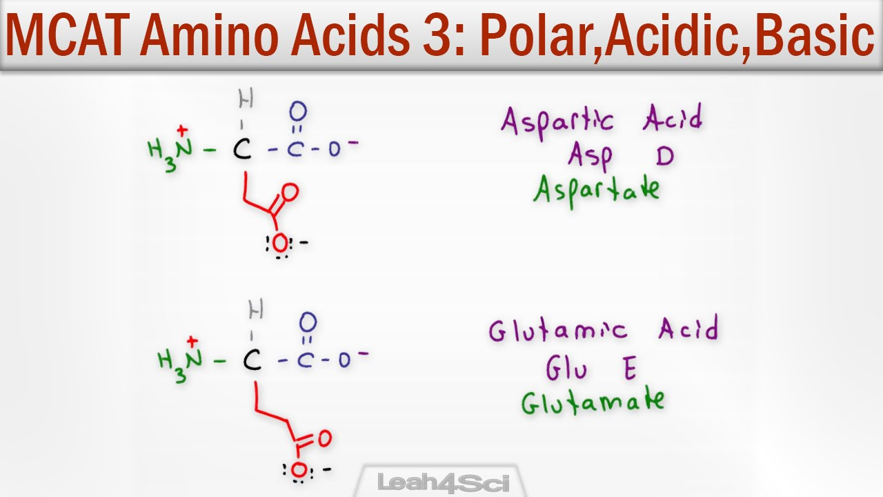 Polar Acidic And Basic Amino Acids Youtube