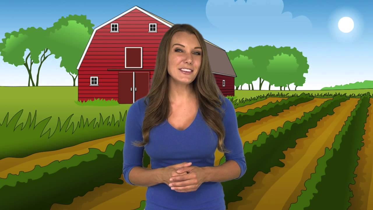 Farm Field And Barn Background Cartoon - YouTube for Animated Farm Field  150ifm