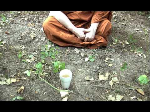 Ajahn Brahm - Simile Of The Cup