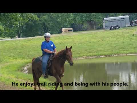 "FOR ADOPTION ""Jimmy"" Aged 15h Black Tennessee Walking Horse Gelding - Beginner Friendly from YouTube · Duration:  6 minutes 49 seconds"