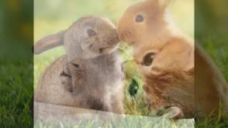 Мое слайд-шоу  про животных