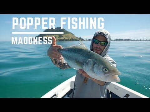 King Of The Harbour Ep.2 Popper Session