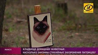 Стихийные кладбища домашних животных разрастаются под Минском