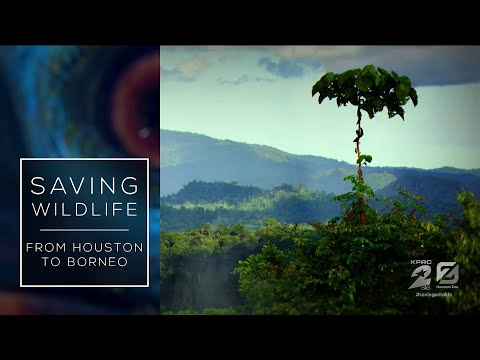 'Saving Wildlife: From Houston to Borneo'