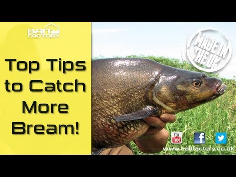 Bream Fishing Tips! Learn How To Mix Groundbait And Catch On The Feeder!