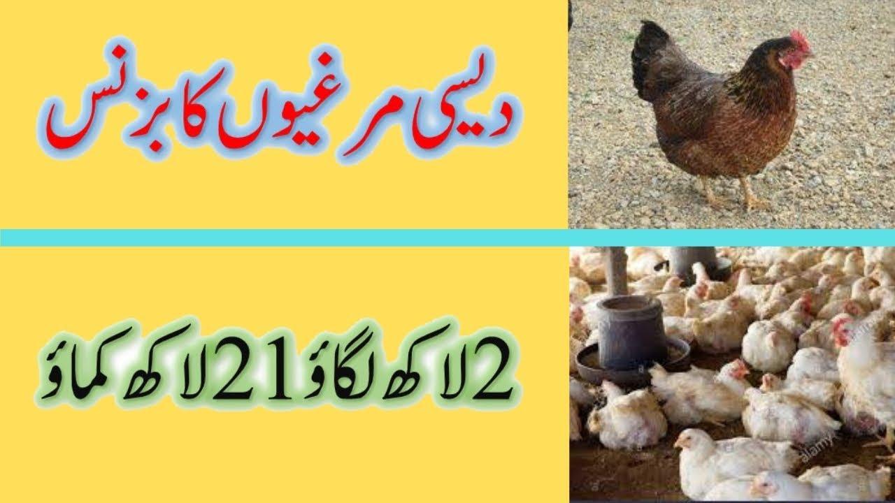 How to start Hens Egg Business in Pakistan -- Best Business Idea in Pakistan