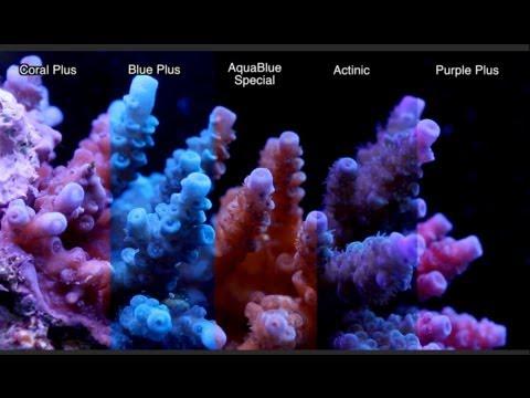 Ati T5 Fluorescent Light Bulb Comparison Part I