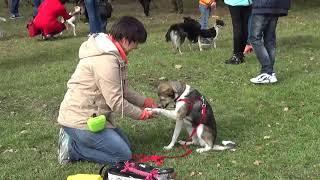 Где взять собаку бесплатно Пойдем домой 31 Белгород