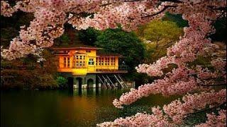 Zen Meditasi Musik | Musik Seruling Jepang | Rileks, Meditasi, Tidur, Suasana