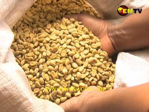 Coffee Pest to be controlled in Eastern Highlands, Jiwaka Province
