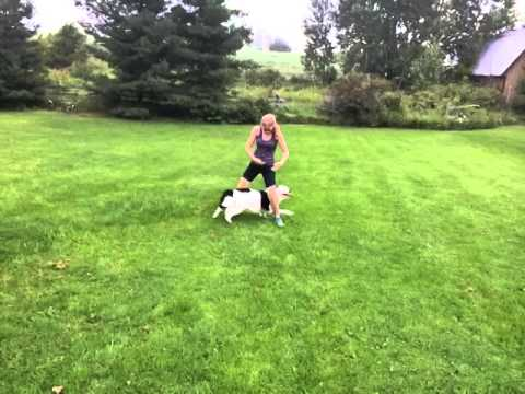 Incredible dog tricks! Two year old Hero the border collie!! – submitted by Sara Carson