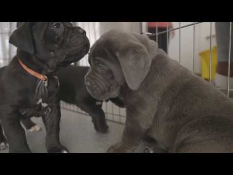 SMARTEST WAY TO POTTY TRAIN YOUR PUPPY