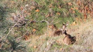 Muzzleloader Doe Hunt in California