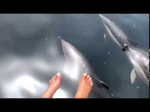 Delfines y ofrenda al mar. Marina Blue Tarifa