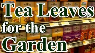 2 Min. Tip: How and Why We Use Tea Leaves in the Garden