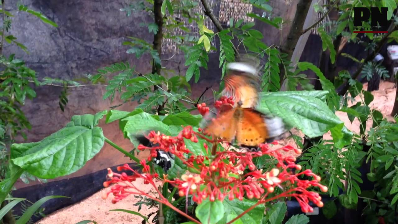 Entopia By Penang Butterfly Farm Preview   YouTube