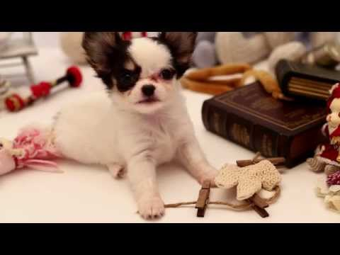 Pullip happy dog / pang-ju Family -ars gratia artis-