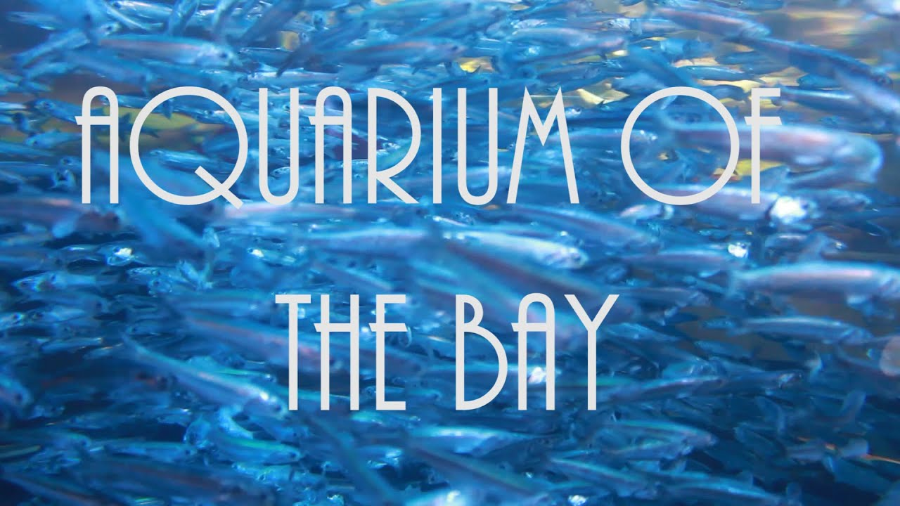 Aquarium Of The Bay Day 3 Pier 39 San Francisco Road