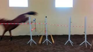 прыжки на свободе 18.05.2016