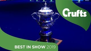 Best in Show at Crufts 2019
