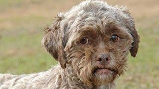 جراء كلاب للبيع اسعار جميع انواع الكلاب شراء كلاب في السعودية كلاب الهاسكي و السلق و البيتبول للبيع