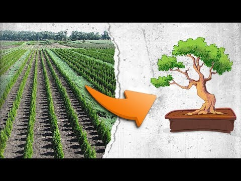 How To Create A Bonsai Tree  - The Transformation