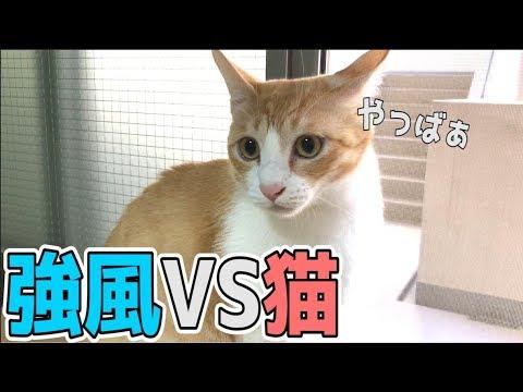 台風の強風にビビりながらも興味津々な猫たち!