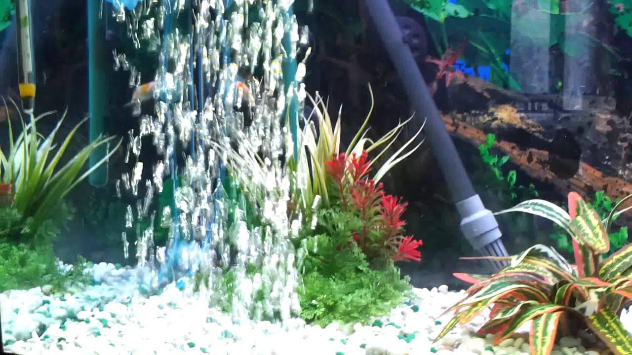 Acquario 200 litri con pesci rossi youtube for Acquario con pesci rossi